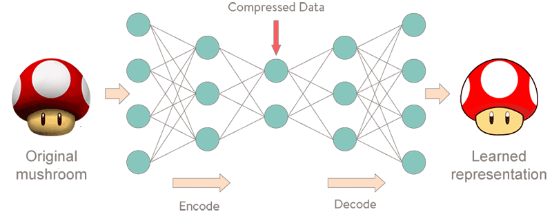 Autoencoder Architecture Artificial Intelligence Beyond Neural Networks & Deep Learning