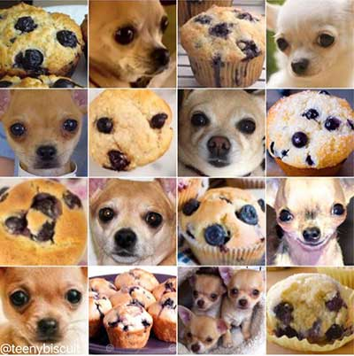 Chihuahua vs. Muffin Computer Vision Image Recognition APIs Google Amazon Microsoft IBM Watson Clarifai