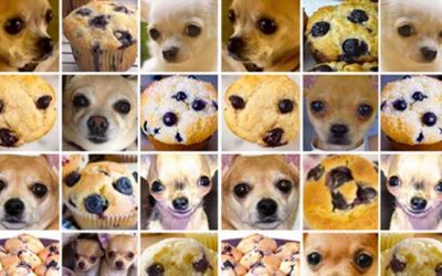 Chihuahua Or Muffin? Comparing Computer Vision APIs